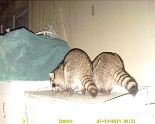 Click image for larger version  Name:Twins... [Desktop Resolution].JPG Views:83 Size:148.1 KB ID:129856