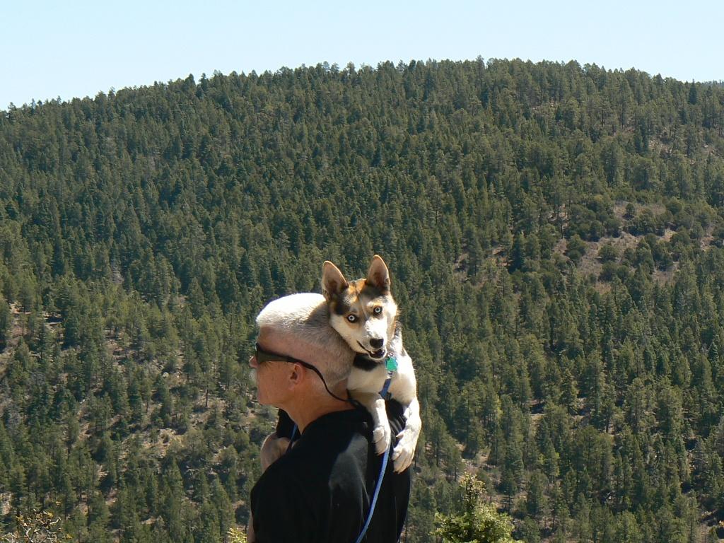 Click image for larger version  Name:Mika enjoying altitude compressed for upload.jpg Views:162 Size:408.7 KB ID:131908