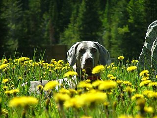 Click image for larger version  Name:Flower Dog.jpg Views:128 Size:70.2 KB ID:13659