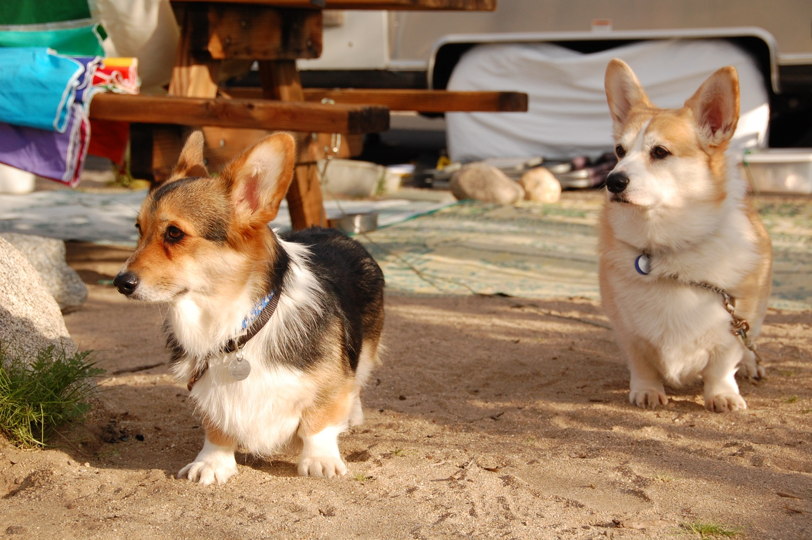 Click image for larger version  Name:DSC_0036 Corgis love Airstreaming.jpg Views:165 Size:505.1 KB ID:137338