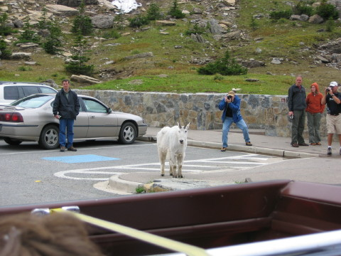 Click image for larger version  Name:Vacation 2005 Glacier 173_5_1_1.jpg Views:106 Size:73.3 KB ID:13830
