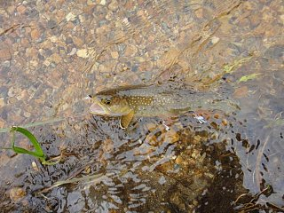 Click image for larger version  Name:Brookieonflyrmnp.jpg Views:76 Size:72.4 KB ID:139052