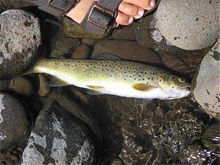 Click image for larger version  Name:Dan'sFish.jpg Views:122 Size:98.5 KB ID:13939