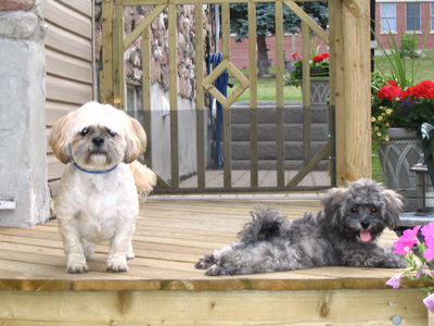 Click image for larger version  Name:Toby and Niki.jpg Views:101 Size:84.0 KB ID:14032