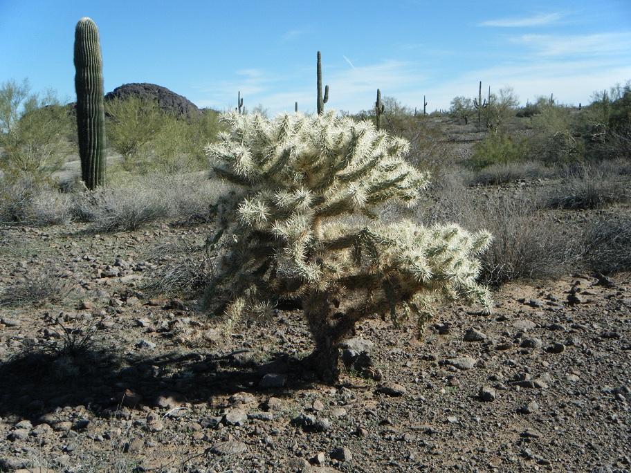 Click image for larger version  Name:Picacho Peak Rally 5.jpg Views:54 Size:407.6 KB ID:148264