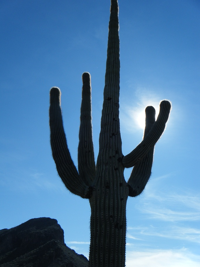 Click image for larger version  Name:Picacho Peak Rally 3.jpg Views:60 Size:180.1 KB ID:151755
