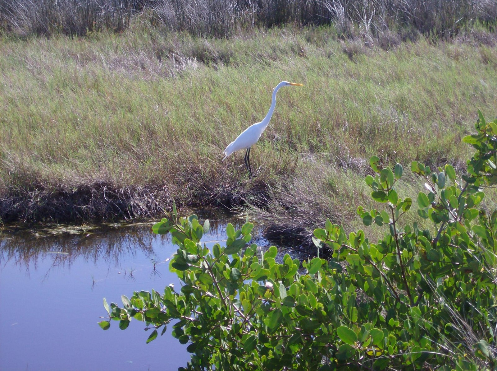 Click image for larger version  Name:Wildlife Drive 006.jpg Views:44 Size:536.4 KB ID:152270
