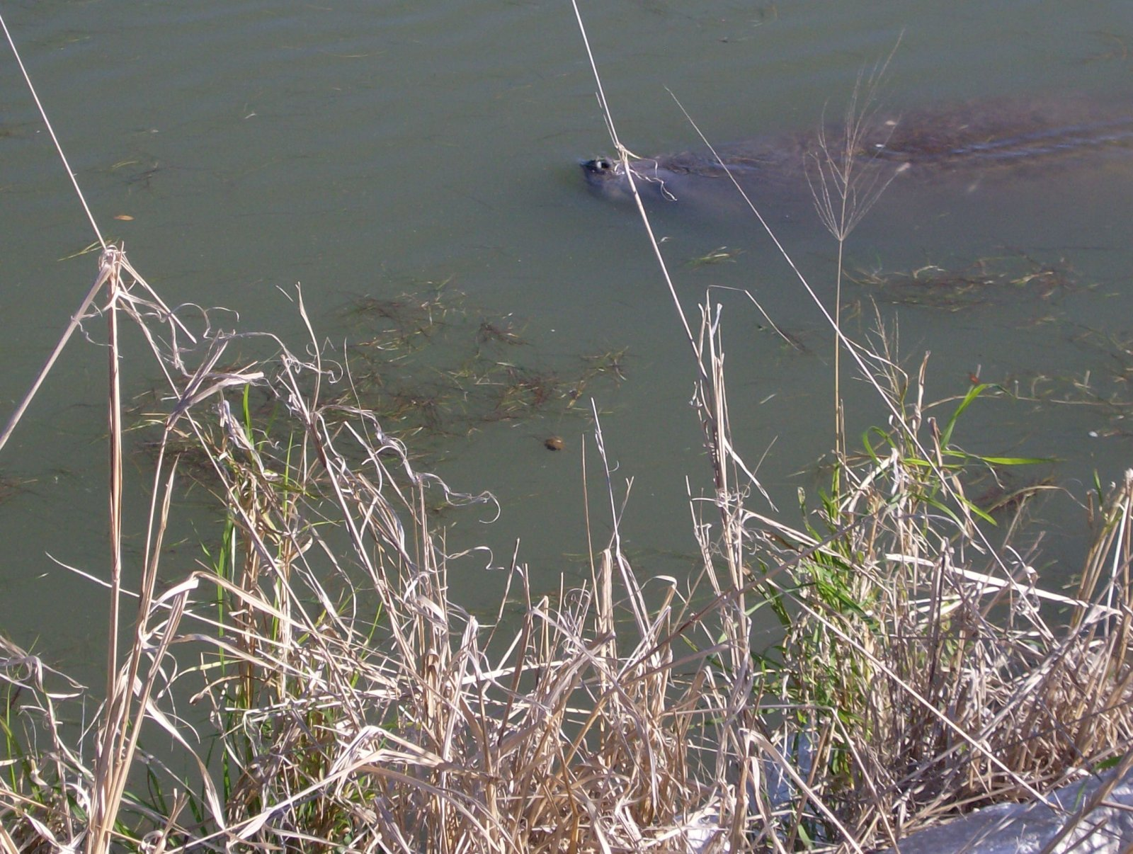 Click image for larger version  Name:Manatees 003.jpg Views:48 Size:378.1 KB ID:152641