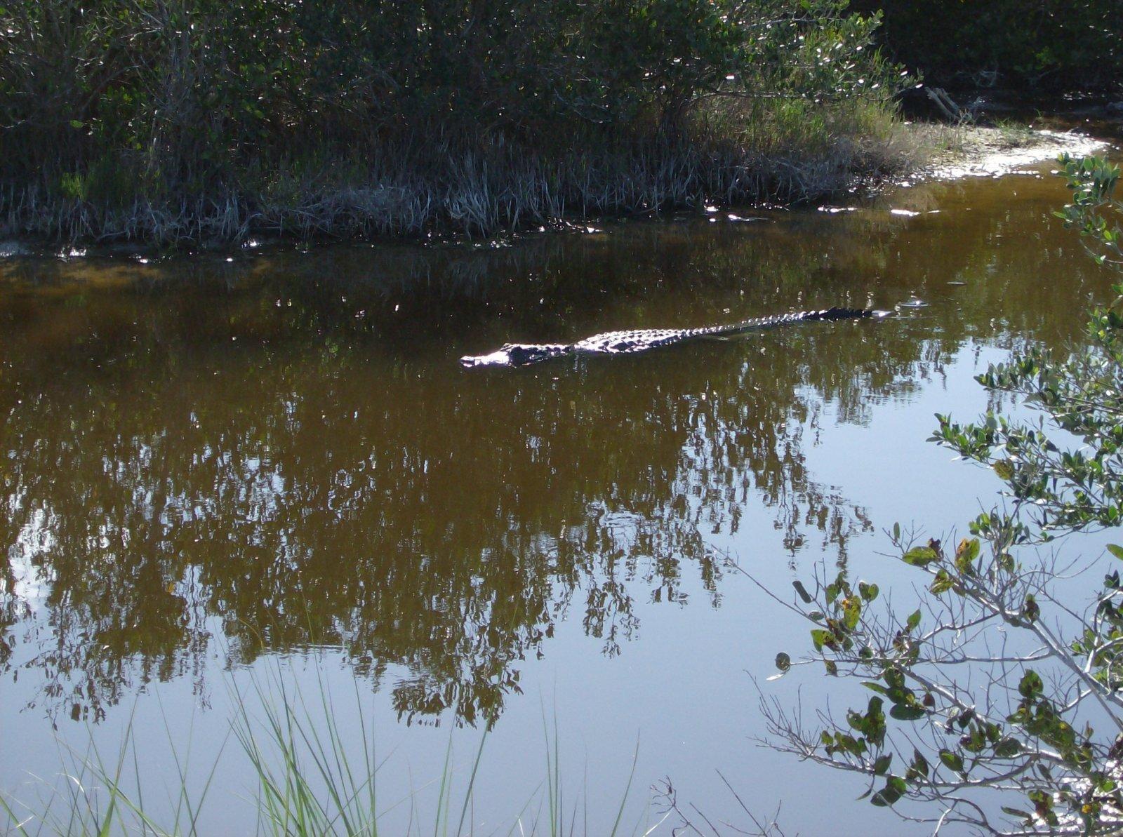 Click image for larger version  Name:Playalina Beach & Florida Gators 004.jpg Views:88 Size:398.5 KB ID:153347