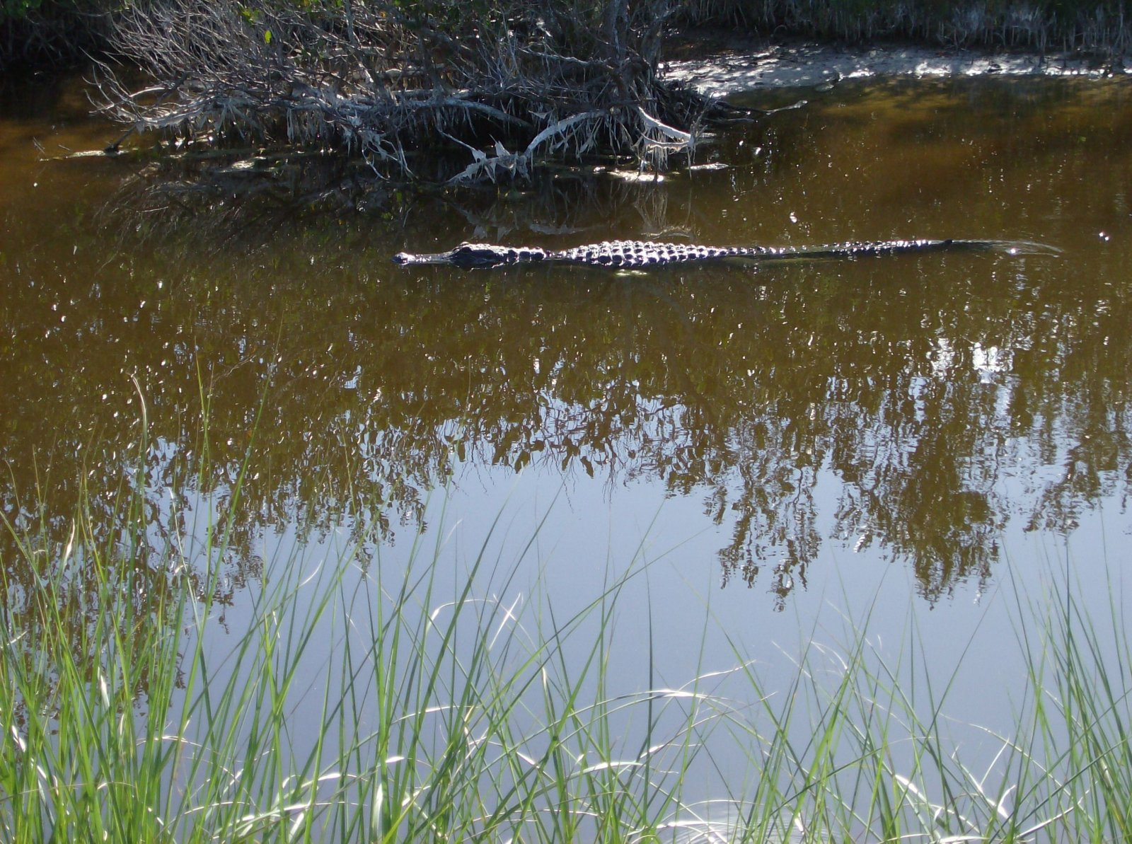 Click image for larger version  Name:Playalina Beach & Florida Gators 006.jpg Views:90 Size:438.4 KB ID:153349