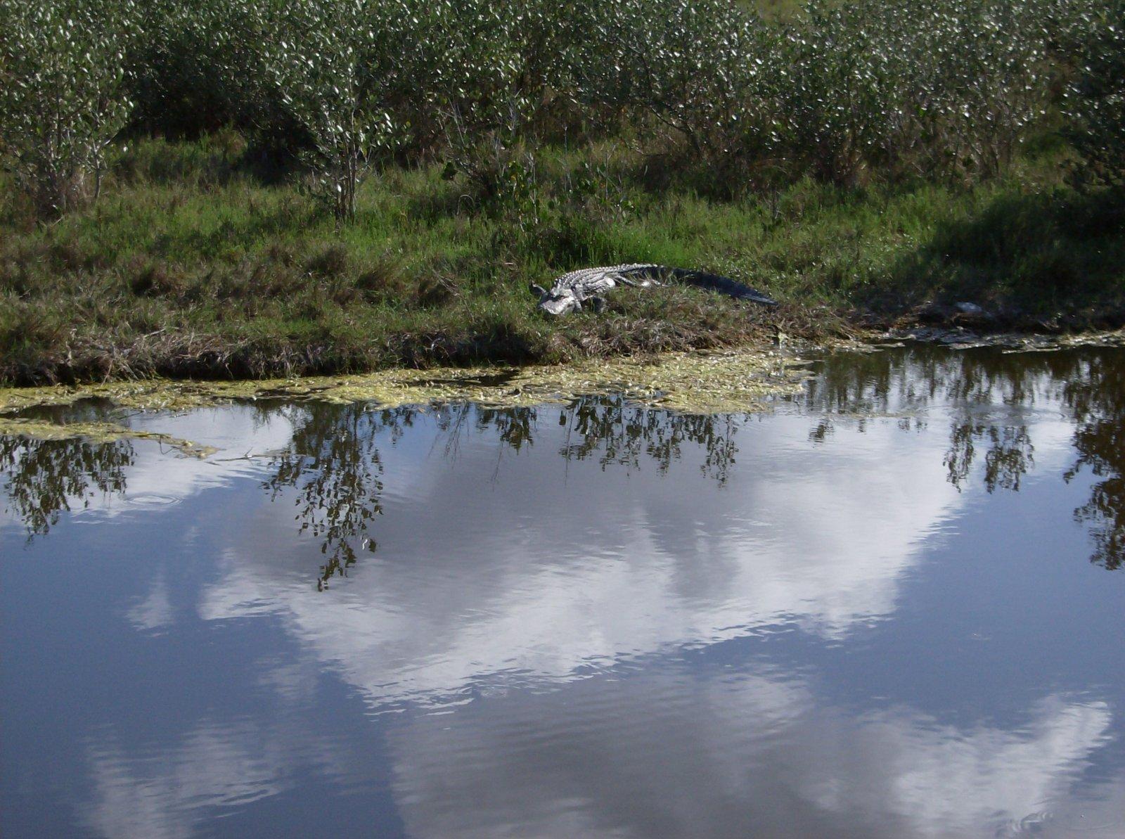 Click image for larger version  Name:Playalina Beach & Florida Gators 009.jpg Views:78 Size:361.2 KB ID:153352