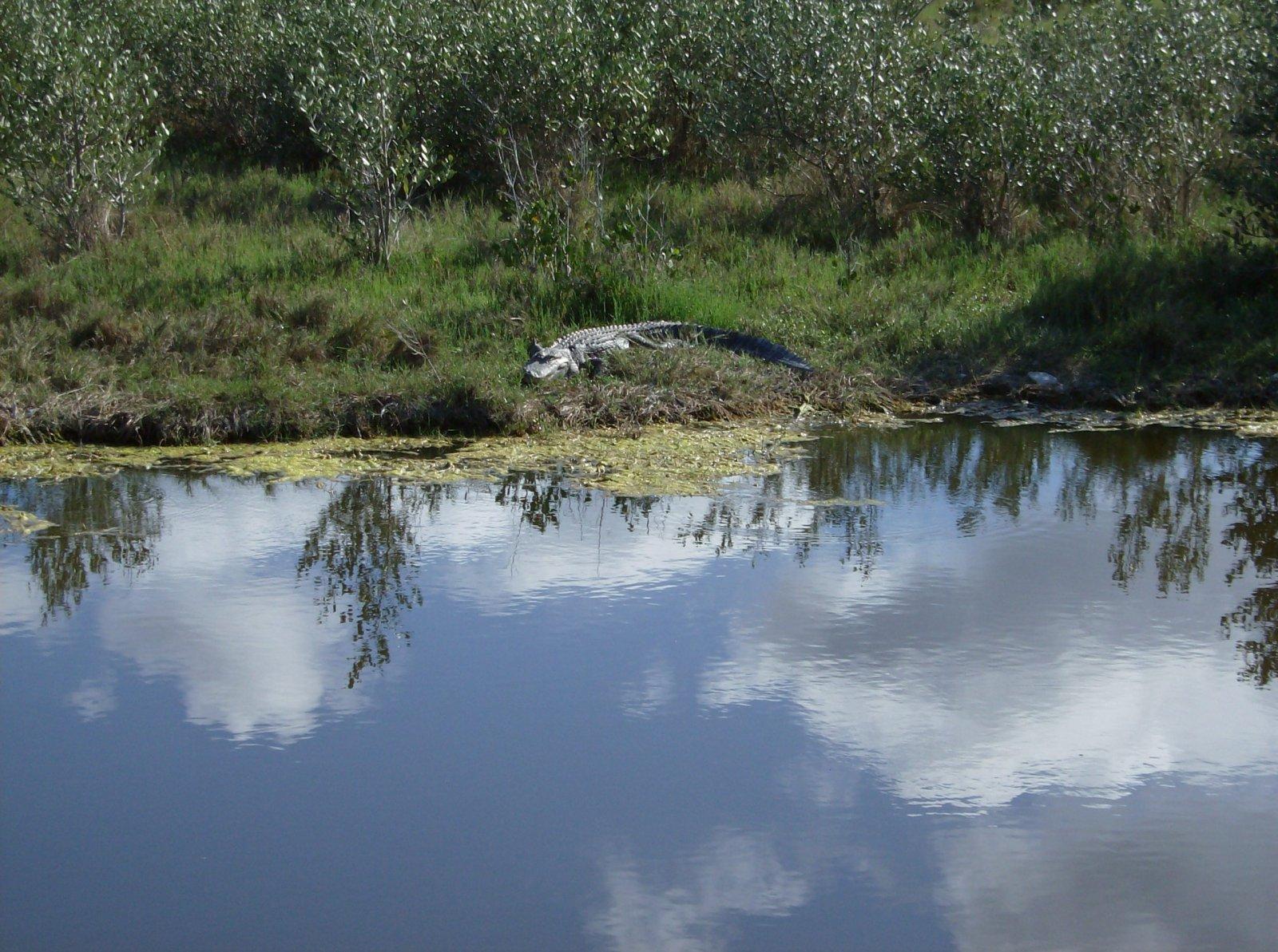 Click image for larger version  Name:Playalina Beach & Florida Gators 010.jpg Views:67 Size:399.1 KB ID:153353