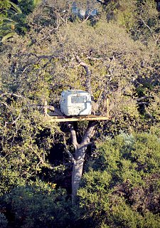 Click image for larger version  Name:An-Airstream-In-A-Tree.jpg Views:145 Size:641.3 KB ID:155008