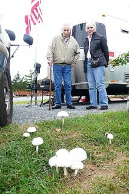 Click image for larger version  Name:9 mushrooms.jpg Views:104 Size:106.9 KB ID:159829