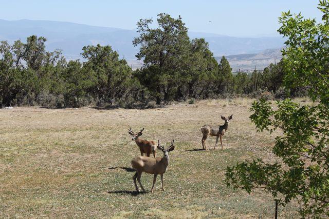 Click image for larger version  Name:Deer 1.jpg Views:56 Size:80.6 KB ID:161663