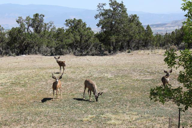 Click image for larger version  Name:Deer 2.jpg Views:59 Size:84.4 KB ID:161664