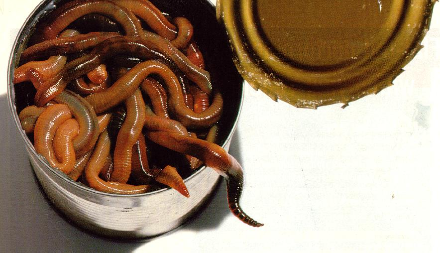 Click image for larger version  Name:can of worms.jpg Views:49 Size:81.0 KB ID:163664