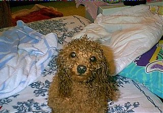 Click image for larger version  Name:wet dog 1.jpg Views:1513 Size:41.8 KB ID:1642