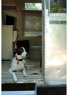 Click image for larger version  Name:Lucytheairstreamdog.JPG Views:76 Size:120.9 KB ID:16527
