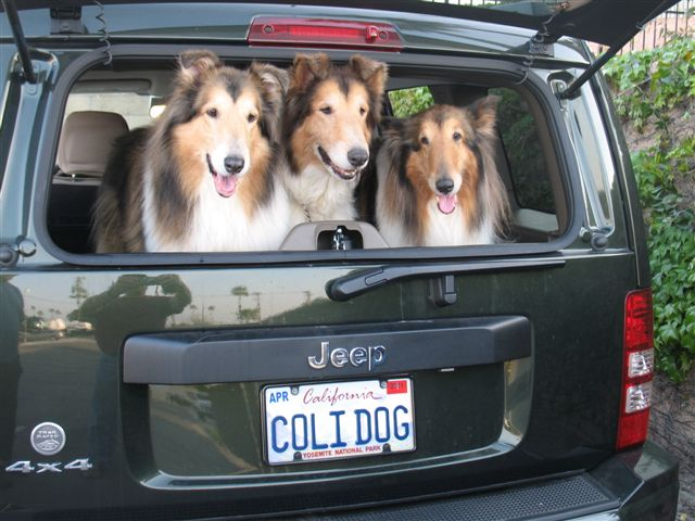 Click image for larger version  Name:Collie Dogs 010.jpg Views:81 Size:66.8 KB ID:165344
