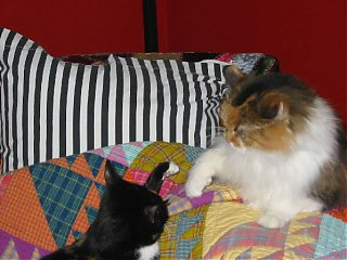 Click image for larger version  Name:play time for cats.jpg Views:1362 Size:46.2 KB ID:1654
