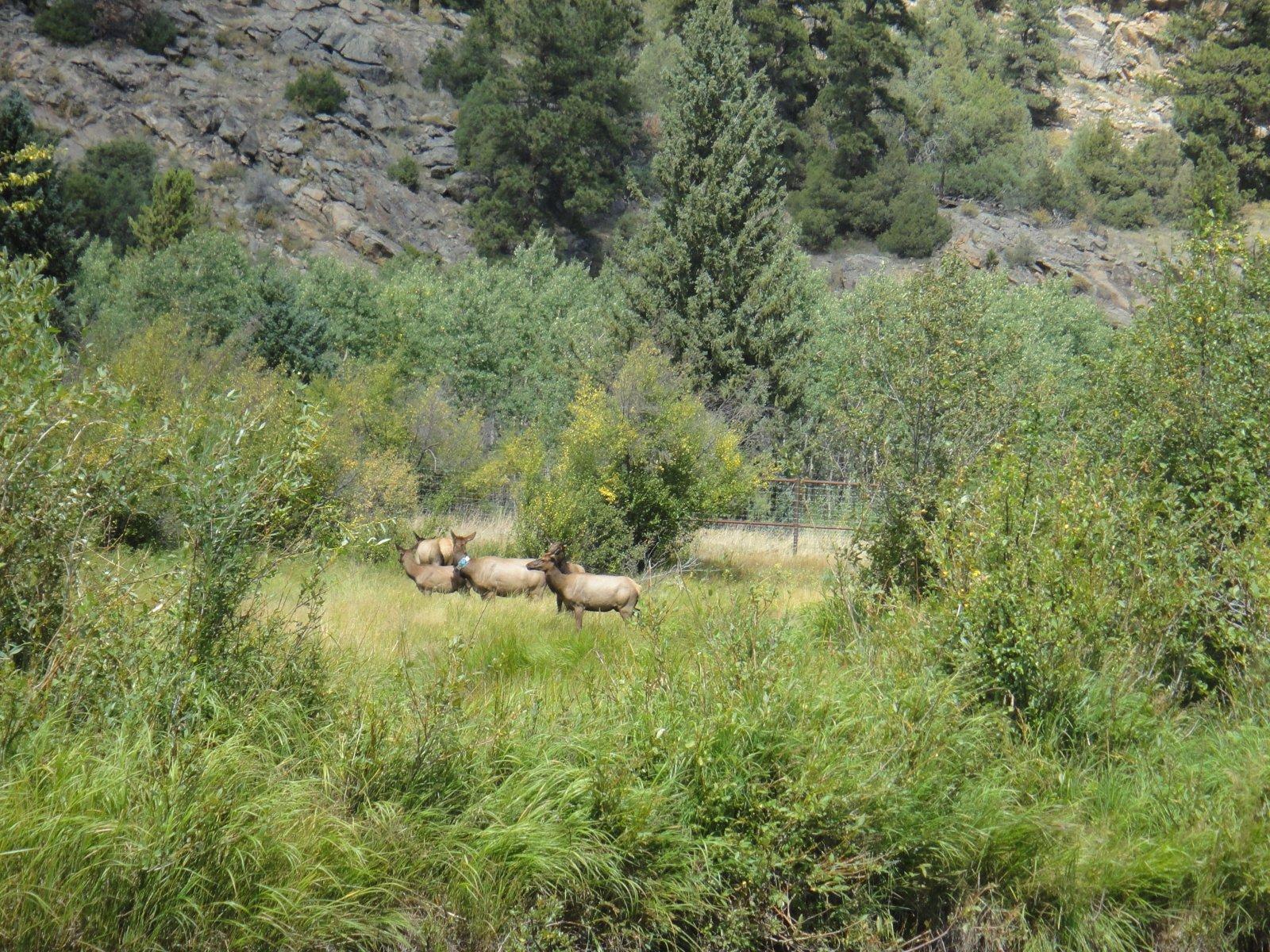 Click image for larger version  Name:Elk.jpg Views:123 Size:635.9 KB ID:167124