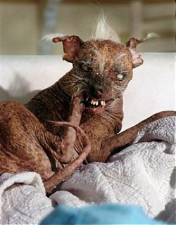 Click image for larger version  Name:sam the ugly dog.jpg Views:85 Size:71.7 KB ID:16783