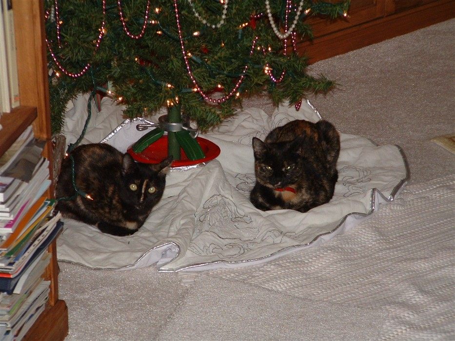 Click image for larger version  Name:Christmas Cats2.jpg Views:78 Size:198.9 KB ID:16830