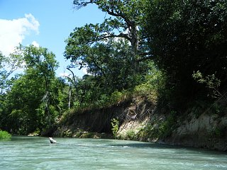 Click image for larger version  Name:San Marcos River 4.jpg Views:99 Size:374.0 KB ID:168571