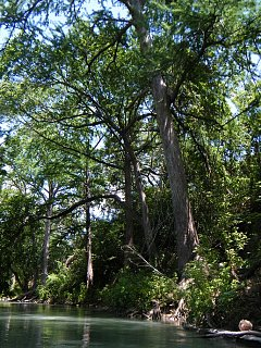 Click image for larger version  Name:San Marcos River 5.jpg Views:102 Size:502.9 KB ID:168572