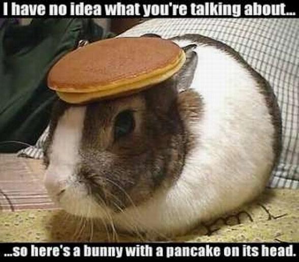 Click image for larger version  Name:rabbit_pancake.jpg Views:84 Size:190.7 KB ID:16967