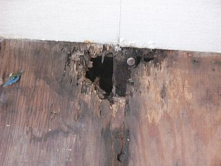 Click image for larger version  Name:floor rot under dinning table.jpg Views:403 Size:122.8 KB ID:172340