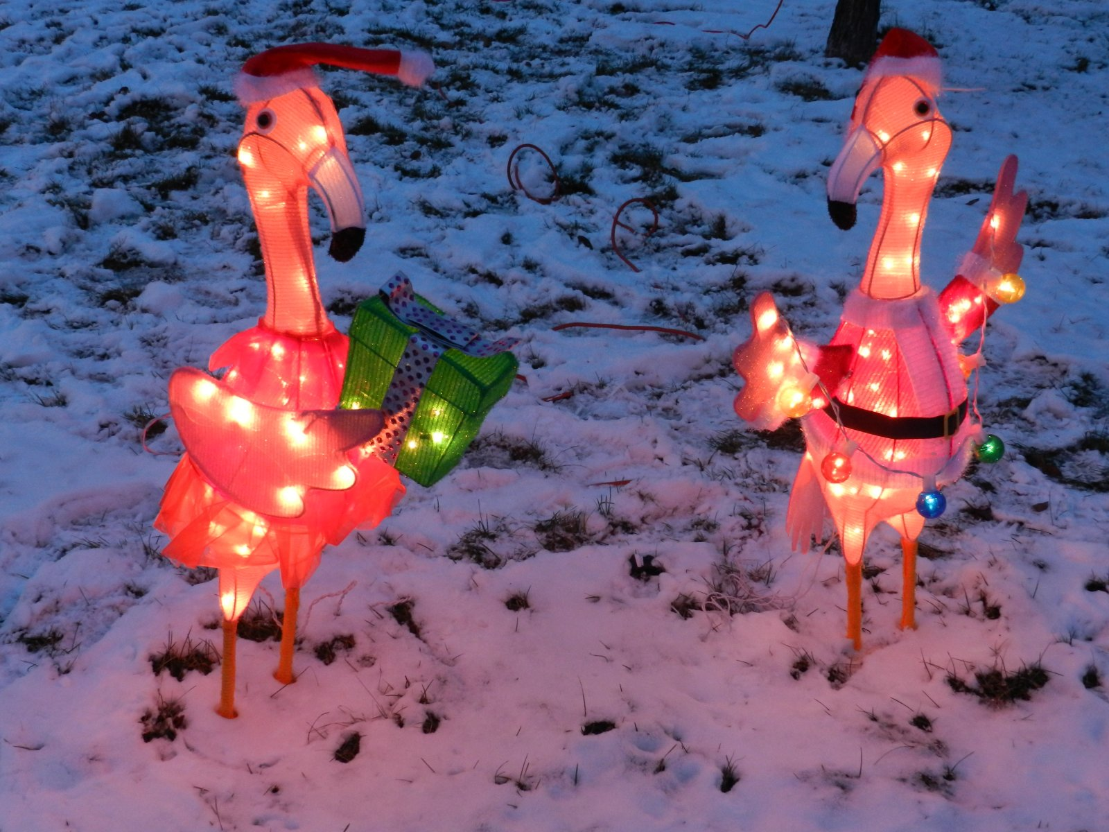 Click image for larger version  Name:2012 flamingos 01.jpg Views:67 Size:318.9 KB ID:173295