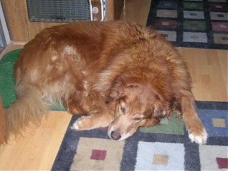 Click image for larger version  Name:Sleepy Claire.jpg Views:85 Size:261.1 KB ID:17519