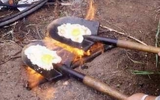 Click image for larger version  Name:eggs anyone.jpg Views:278 Size:59.8 KB ID:18142