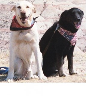 Click image for larger version  Name:pups.jpg Views:905 Size:33.4 KB ID:1837