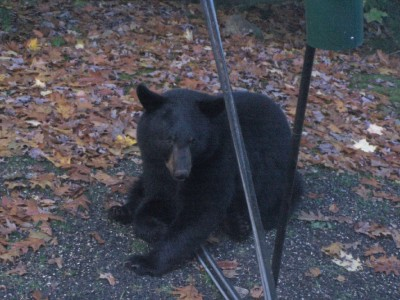Click image for larger version  Name:Bird Feeder Bear.jpg Views:86 Size:56.9 KB ID:18622