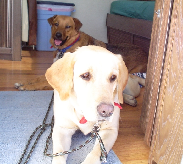 Click image for larger version  Name:dogs.JPG Views:81 Size:198.1 KB ID:18859