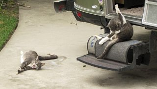 Click image for larger version  Name:Otis and Sammy.jpg Views:276 Size:136.3 KB ID:190056
