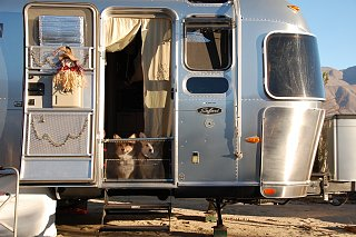 Click image for larger version  Name:DSC_0022 Homemade dog gate.jpg Views:124 Size:522.1 KB ID:191931