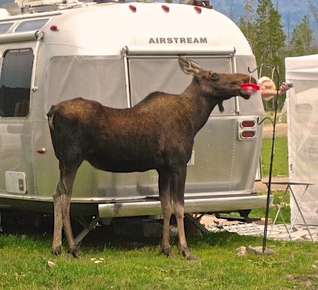Click image for larger version  Name:me and the moose.jpg Views:220 Size:176.7 KB ID:193703