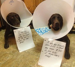 Click image for larger version  Name:dogs in cones.jpg Views:210 Size:386.6 KB ID:196454