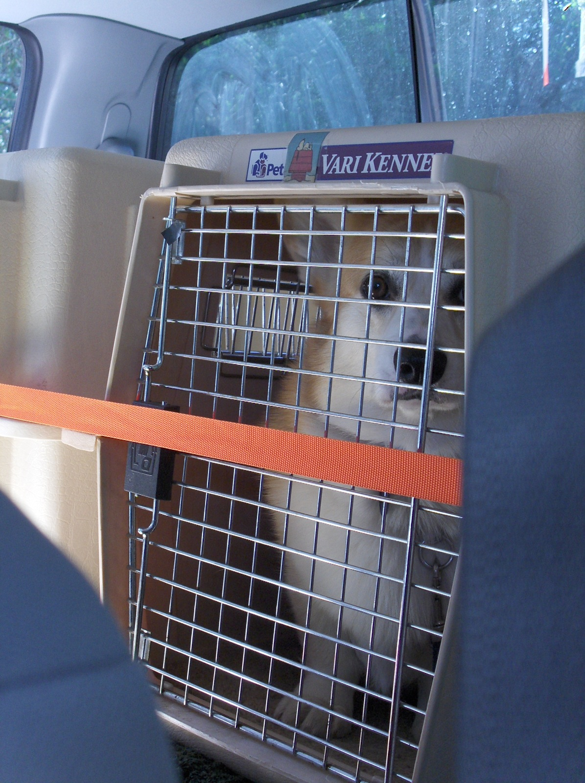 Click image for larger version  Name:HPIM2563 Mac in Vari Kennel crate.jpg Views:63 Size:539.0 KB ID:198286