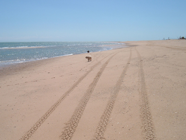Click image for larger version  Name:nude pup beach.jpg Views:73 Size:120.6 KB ID:19918