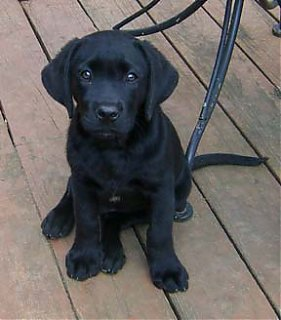 Click image for larger version  Name:puppy.jpg Views:138 Size:44.6 KB ID:20232