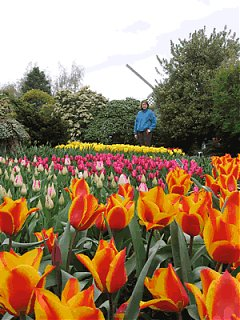 Click image for larger version  Name:ktulip.gif Views:109 Size:58.8 KB ID:20300