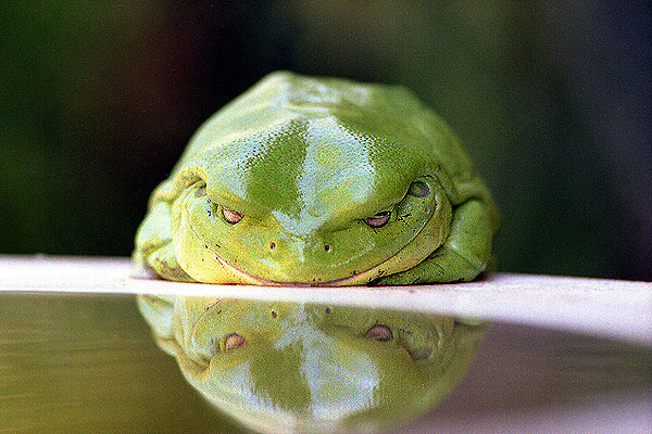 Click image for larger version  Name:toad.jpg Views:297 Size:80.5 KB ID:2063