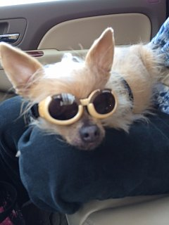 Click image for larger version  Name:doggles.JPG Views:103 Size:62.3 KB ID:212439