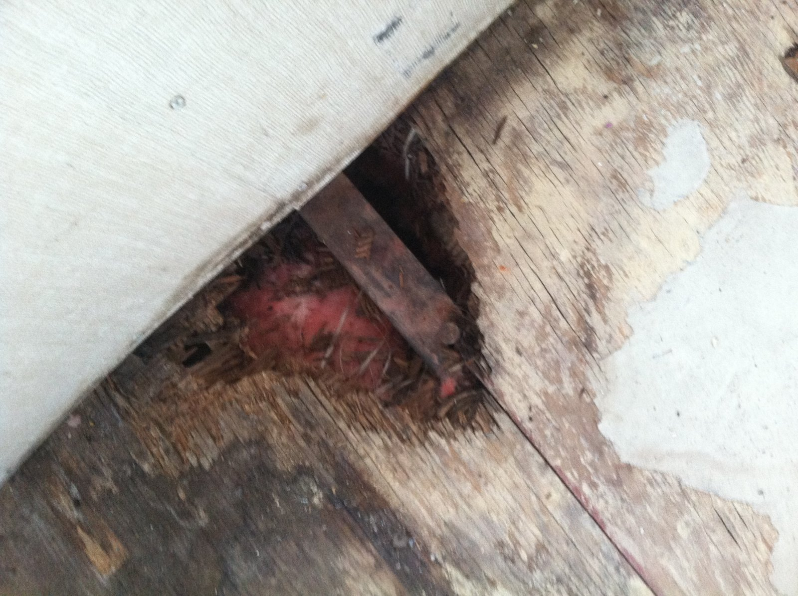 Click image for larger version  Name:floorrot.jpg Views:92 Size:355.0 KB ID:213043