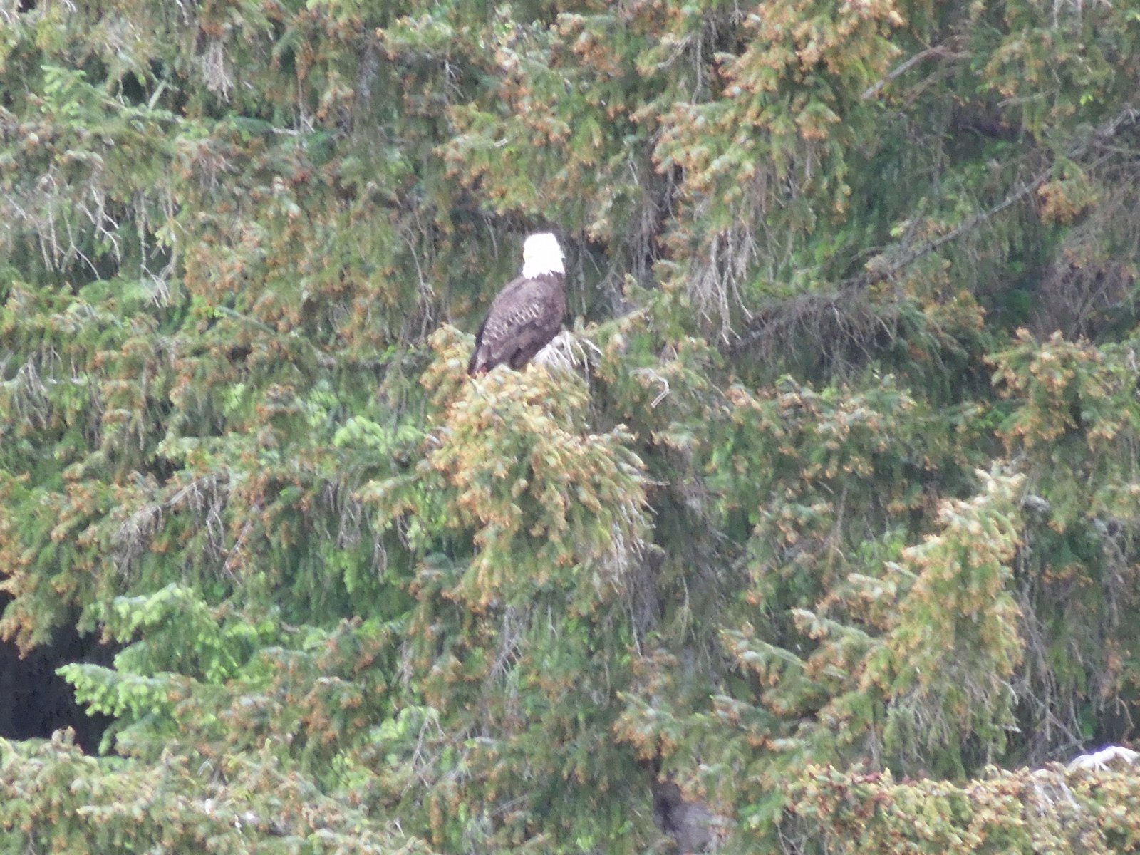 Click image for larger version  Name:Haines AK 033.jpg Views:80 Size:445.5 KB ID:214338